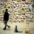 Evidence: Cats & Dogs