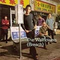 The Wallflowers: (Breach)